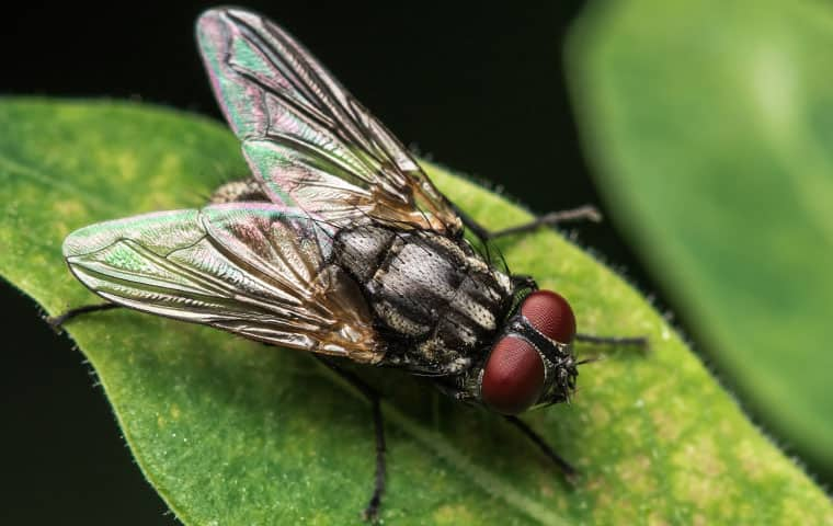 a house fly up close on a leaf in queen creek arizona