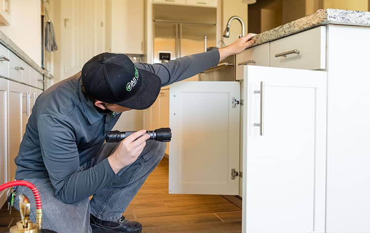 an all clear pest control technician inspecting inside of a mesa arizona home