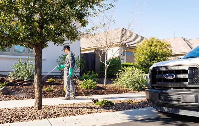 an all clear pest control service technician treating a home in phoenix arizona for weeds