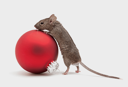 mouse next to holiday decoration