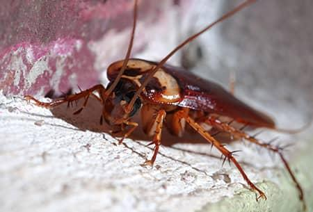 cockroach in tulsa home