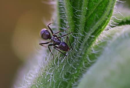 ant on a cactus plant