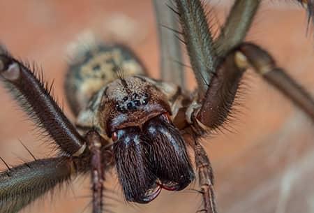 spider up close in tulsa
