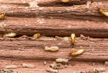 termites in tulsa ok