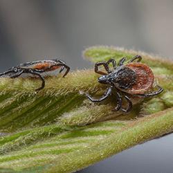 ticks on a leaf outside tulsa home
