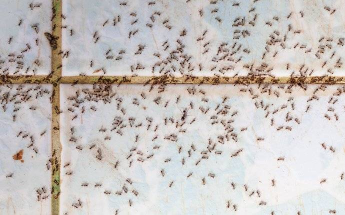 an ant infestation on a kitchen floor