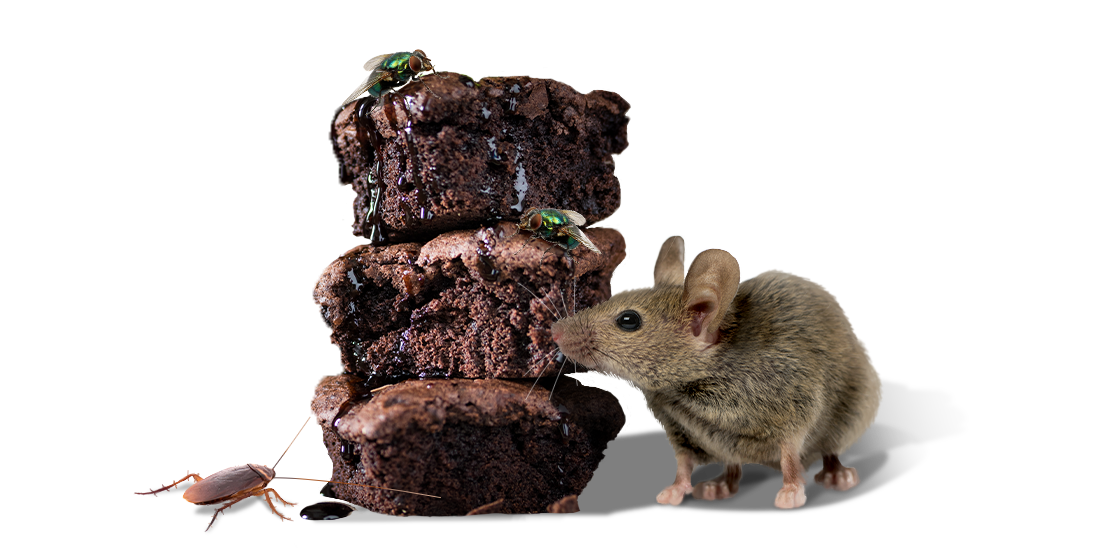 mouse with stack of brownies