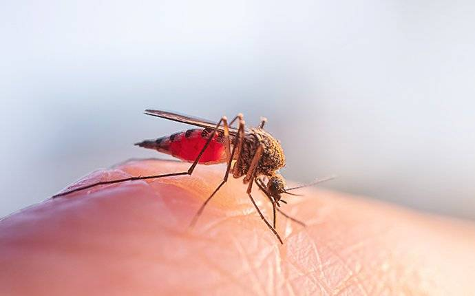a mosquito biting skin on someones finger