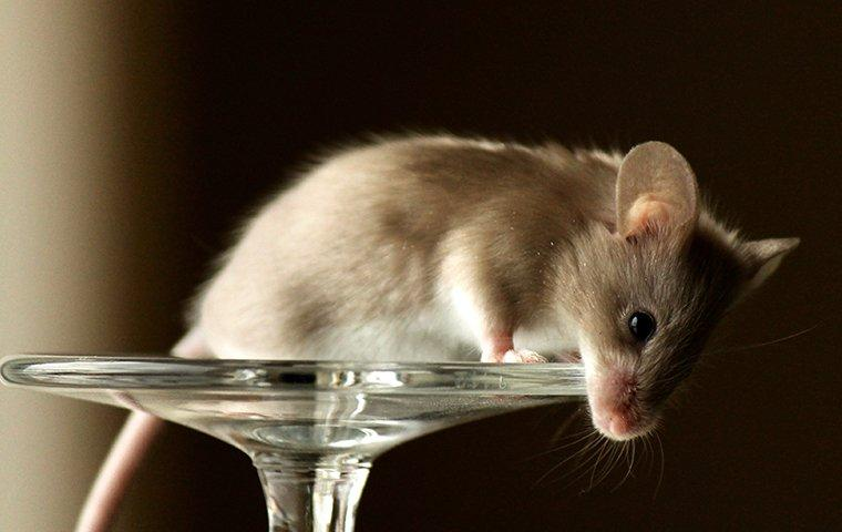 a mouse on a wine glass