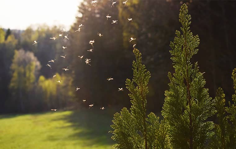 mosquitoes swarming outside in the spring in durham north carolina