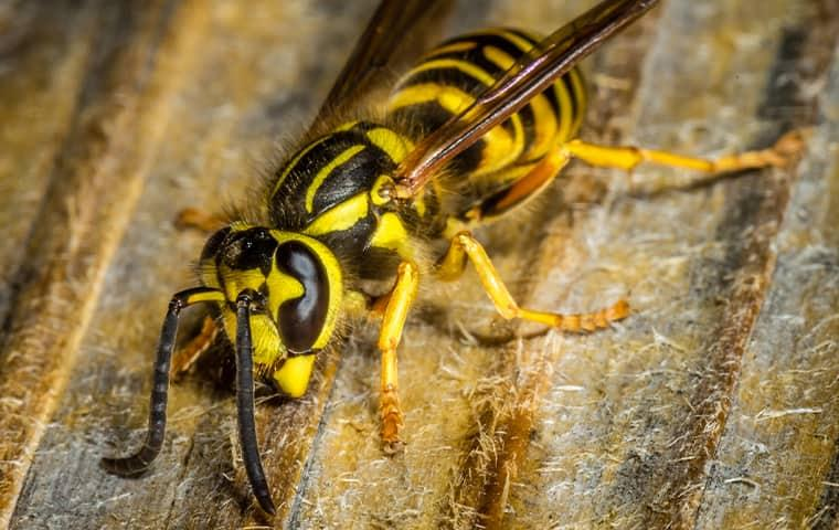 a large yellow jacket crouched down on a metal structure along a raleigh residential rooftop