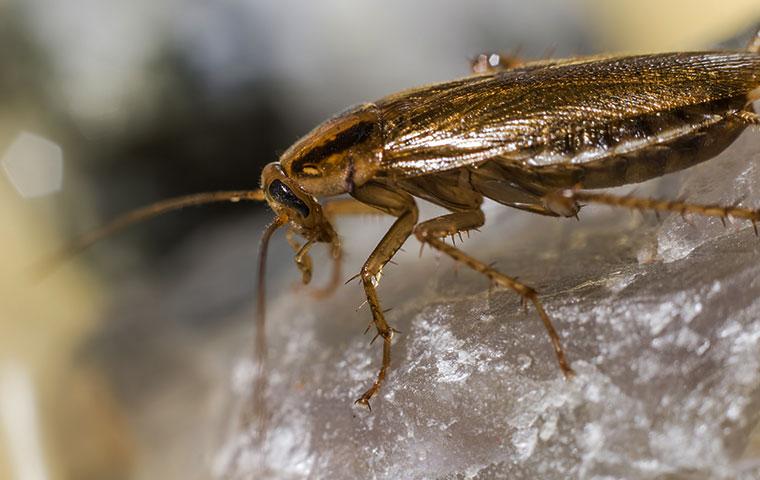 a roach inside a kitchen in durham north carolina