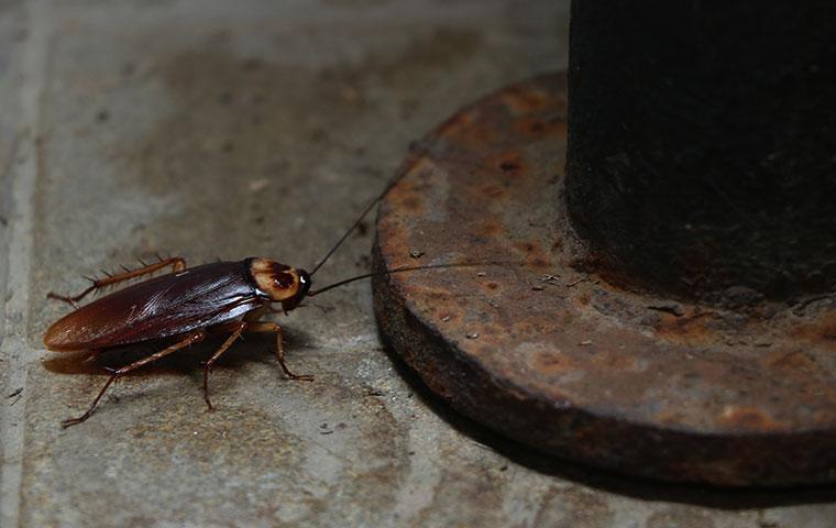 a cockroach inside a bathroom in benson north carolina