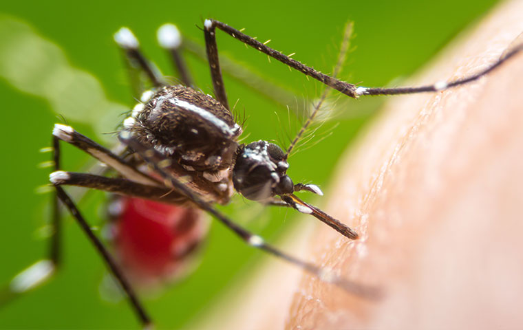a mosquito biting a person in elroy north carolina