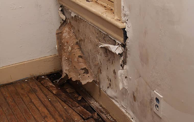 moisture damage to a home in raleigh north carolina