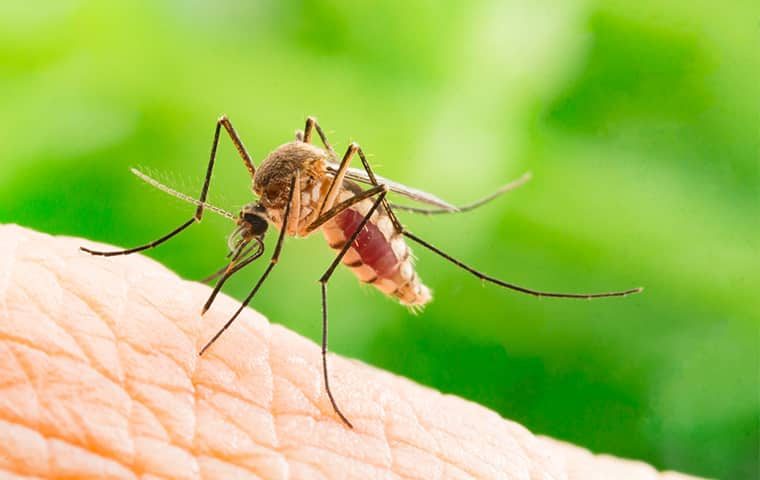 a mosquito biting a person in raleigh north carolina
