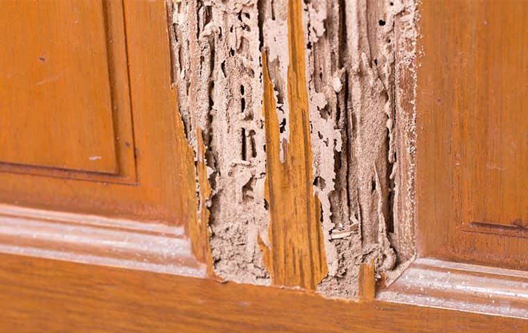 termite damage in an edenton north carolina home