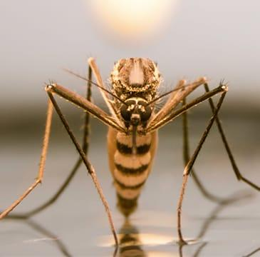 a mosquito landing on a tabletop in boca raton florida