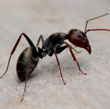 a homeowner and the gotbugsikill owner outside of a home in boca raton florida