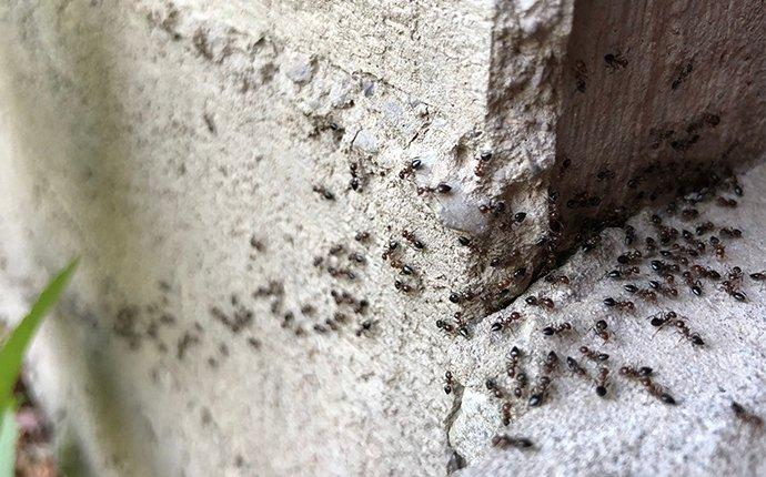 ants on the corner of house