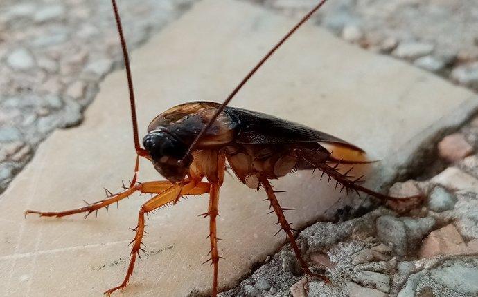 cockroach in yard