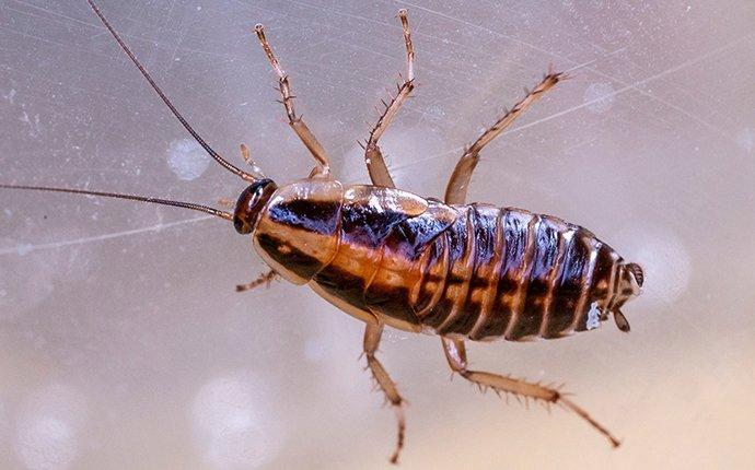 a cockroach on glass