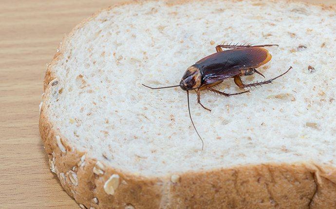cockroach crawling on bread