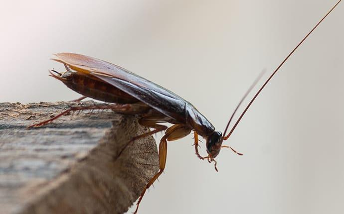 a cockroach crawling in a berkeley home