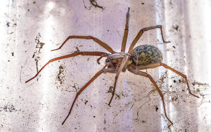 a house spider hanging in a window in brentwood california
