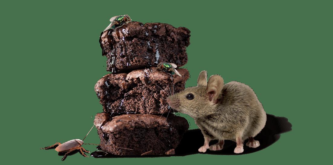 pests eating a brownie
