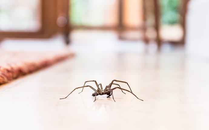 spider crawling on floor