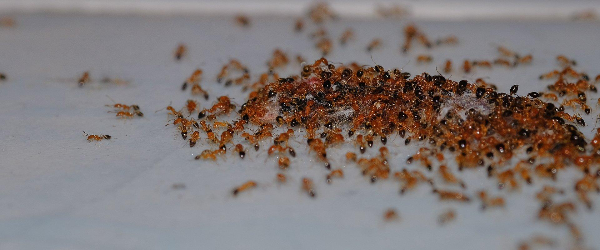 a large group of ants