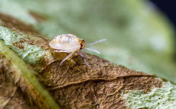 a tiny mite on a leaf