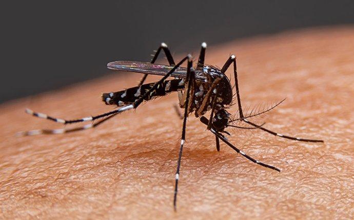 a mosquito biting a brisbane resident