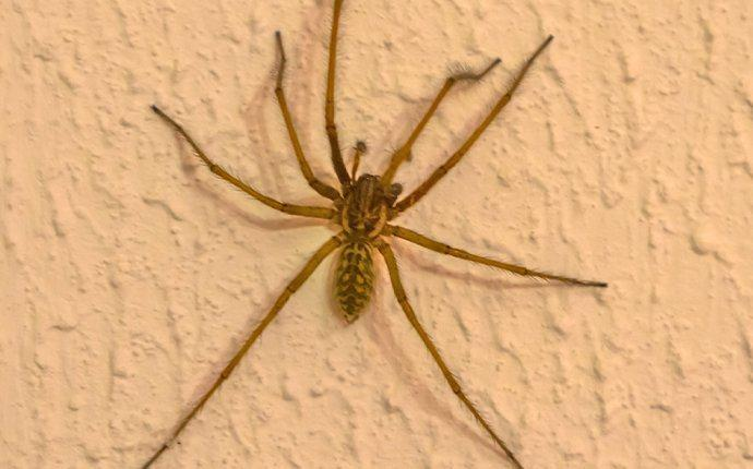 spider crawling on the wall
