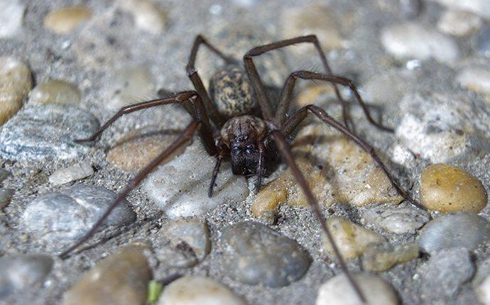 spider crawling on pebbles