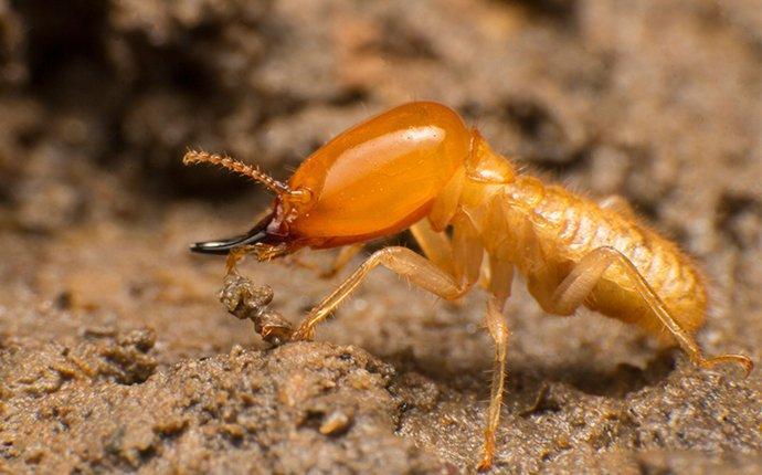 a large termite up close