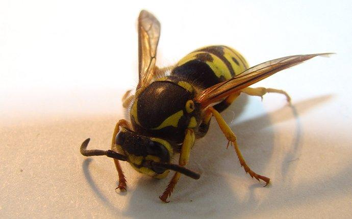 a wasp inside of a kitchen