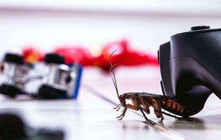 cockroach crawling on toys