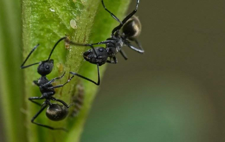 ants on a plant