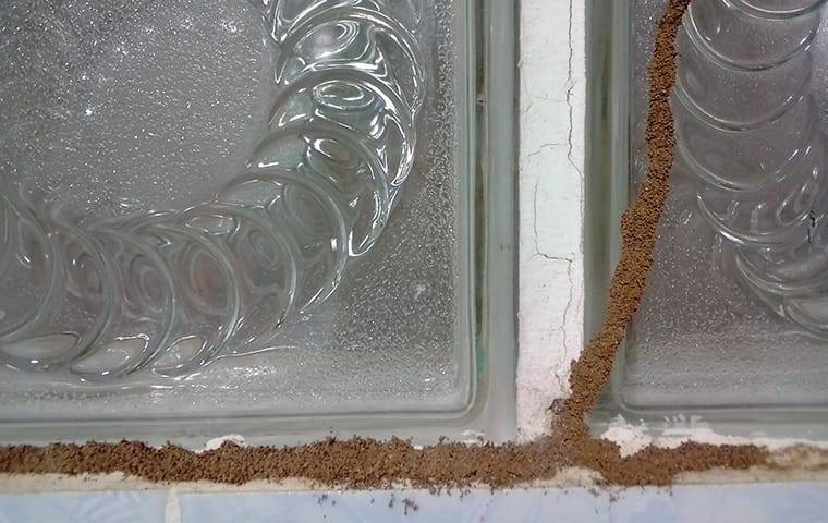 mud tubes on a window in a home