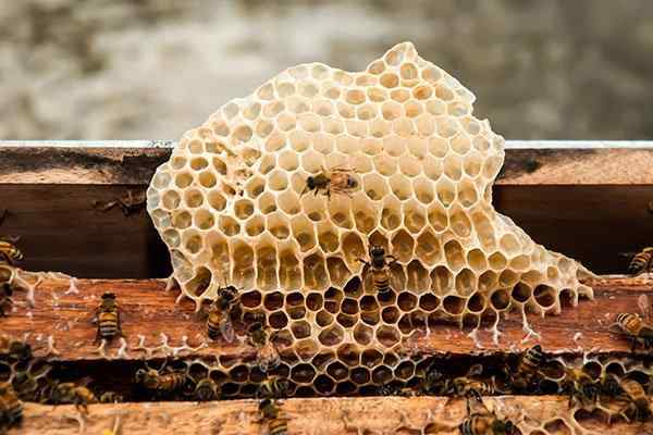 a bee hive outside home