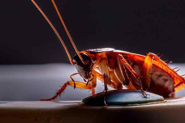 a cockroach in a dark basement