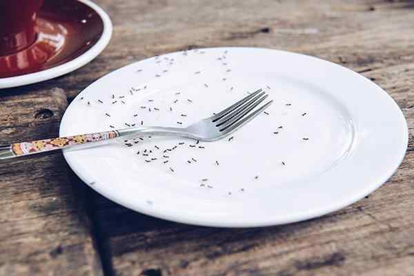 an ant infestation on a plate in  a kitchen