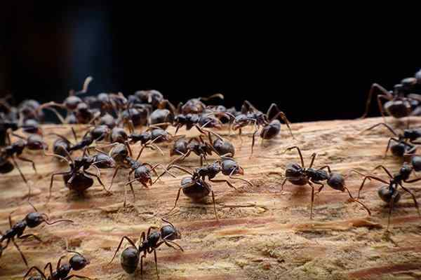ants crawling on wood in a yard