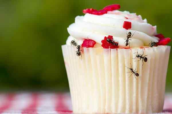 ants crawling on a cupcake