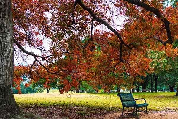 autumn in a texas park