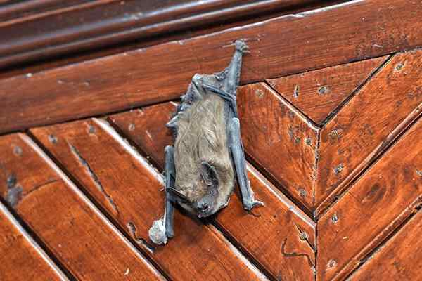 a bat hanging on a wall inside a home