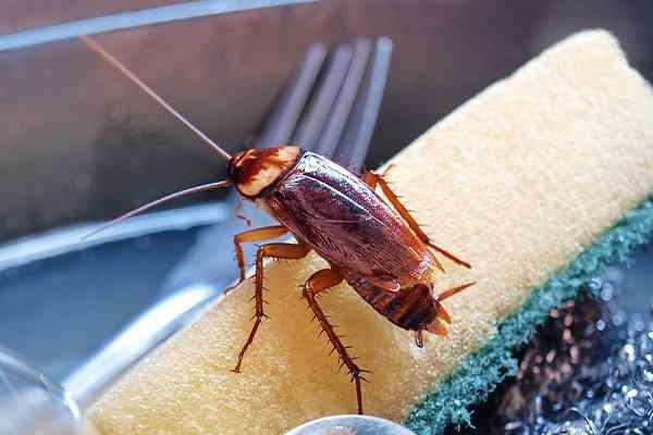 a cockroach crawling in a kitchen sink