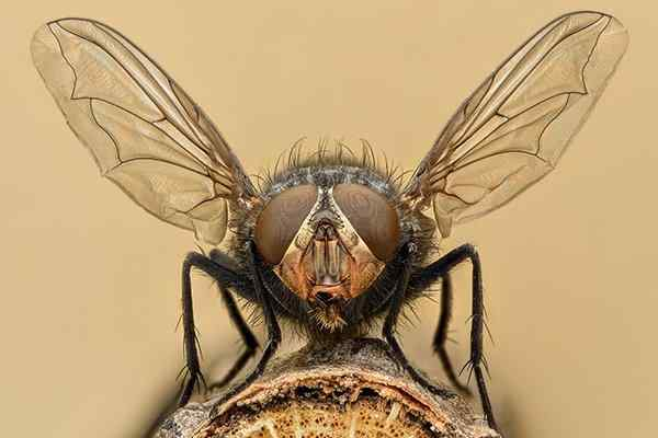 house fly on a piece of wood